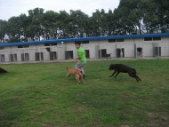 http://www.buddydog.net/wp-content/uploads/Yogi-4-wpcf_190x143.jpg