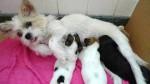 mum & 4 puppies